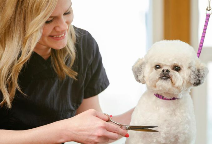 Dog Grooming and Haircuts