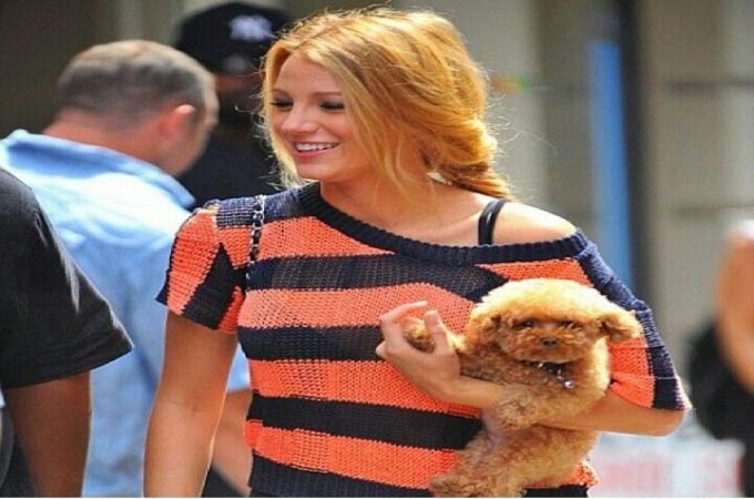 Blake Lively and Teacup Maltipoo