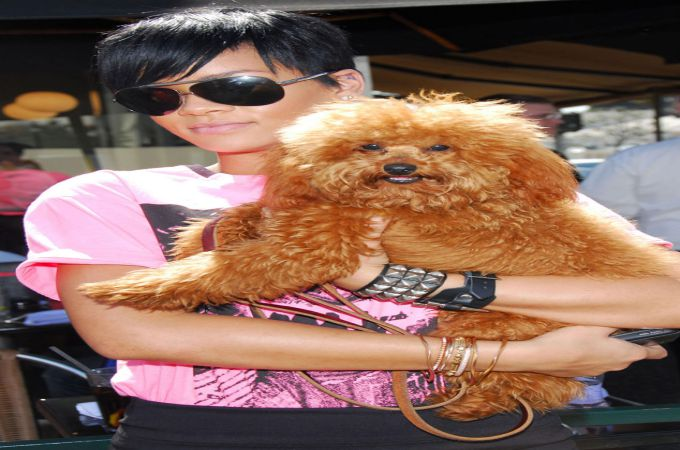 Rihanna and Oliver Cute Maltipoo