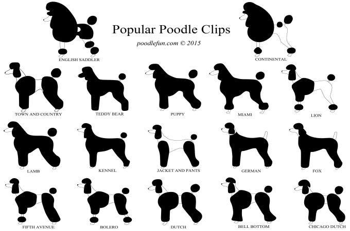 chart of haircuts and clips for poodle