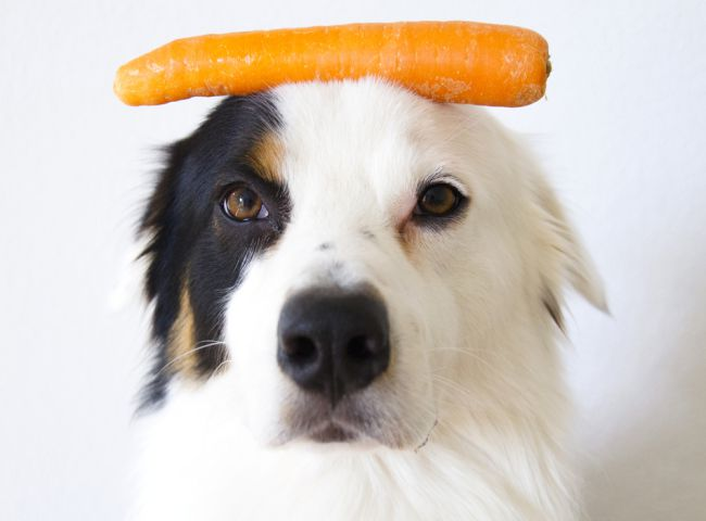 Are Carrots Good for Dogs Picture and Guide