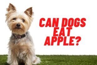 can dogs eat apple guide
