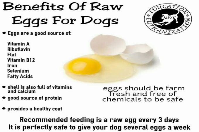 Is Egg Yolk Good For Dogs