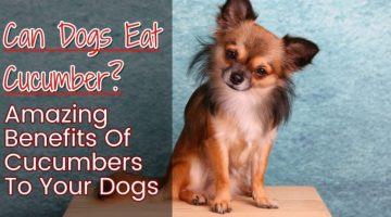 Can Dogs Eat Cucumber? The Healthy Vegetables Treats For Your Pets