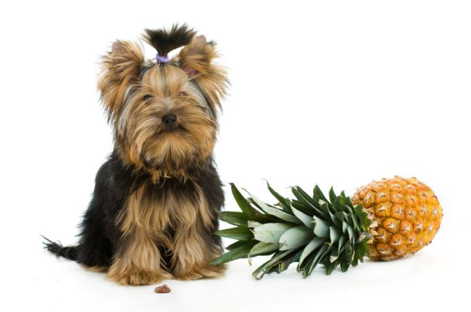 pineapple health benefits for dogs