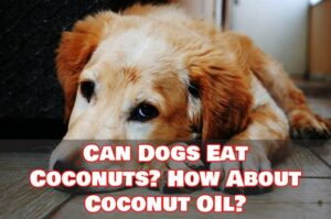 Can Dogs Eat Coconuts and Coconut Oil