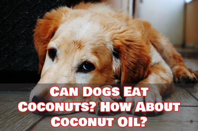 Can Dogs Eat Coconut and Coconut Oil?
