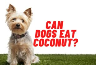 can dogs eat coconut guide