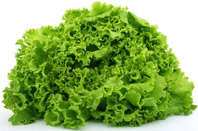 Fresh Green Lettuce For Dogs