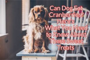 Can Dogs Eat Cranberries? Here's What You Need to Know About These Sweet Treats