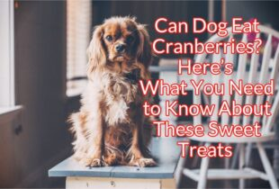 Can Dogs Eat Cranberries Info