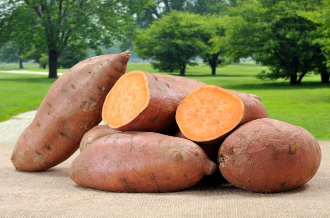 Can Dogs Eat Sweet Potatoes?