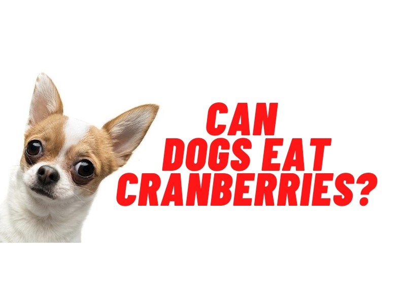 can dogs eat cranberries guide
