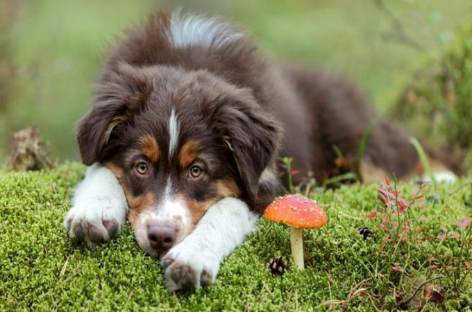 dog and mushroom