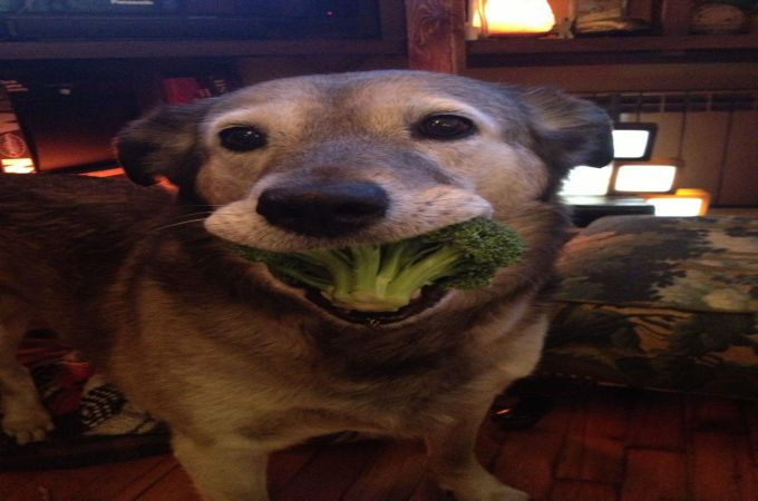 Dogs Eating Brocolli