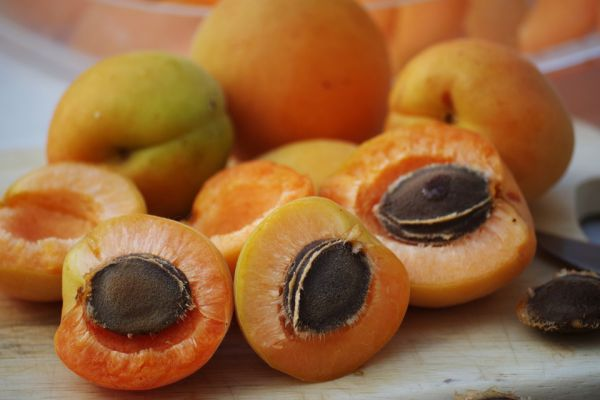 Apricot is bad for dogs?