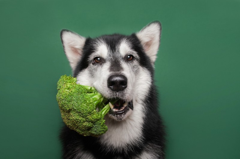 Dog wants to eat raw broccoli