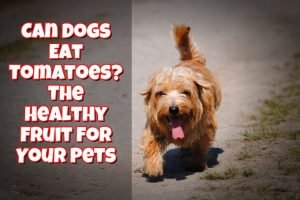 Can Dogs Eat Tomatoes? The Healthy Fruit For Your Pets