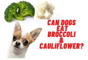 can dogs have broccoli & cauliflower