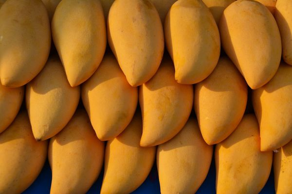 Delicous Mangoes For Dogs