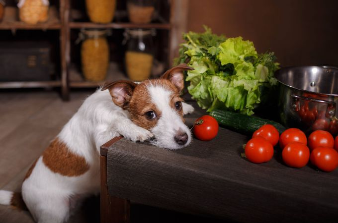 Red Tomatoes for Dogs