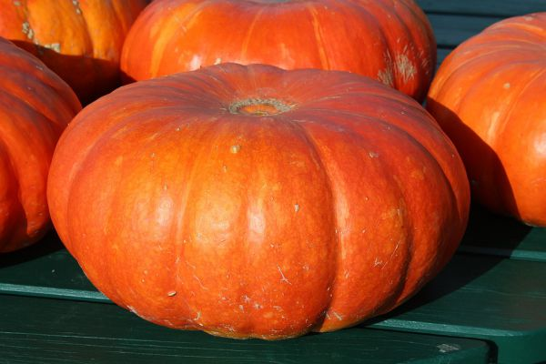 Pumpkin Health benefits for pets