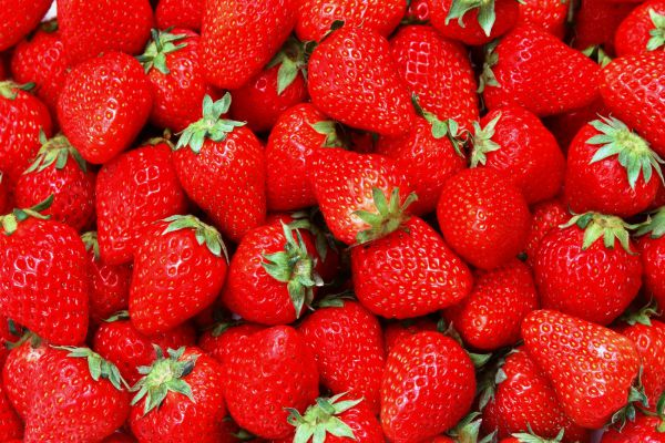 Strawberries for dogs health
