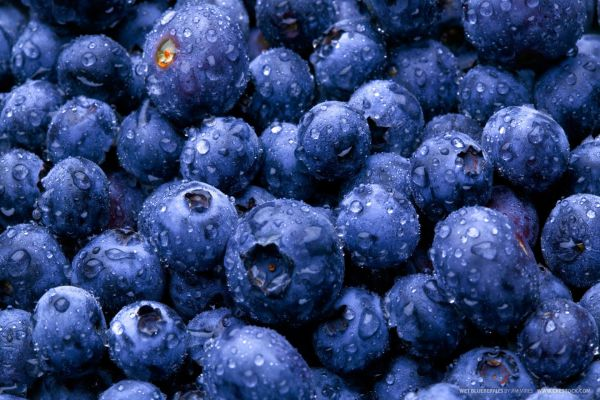 blueberries for dogs benefits