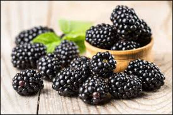 health benefits of Blackberries for dogs