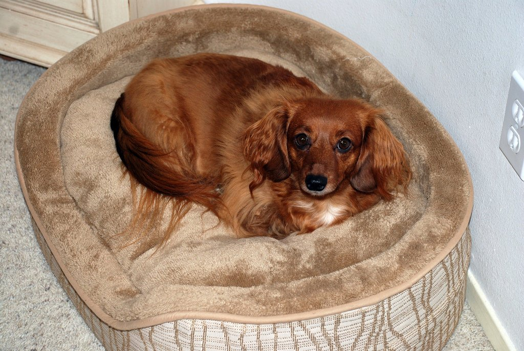 Waterpoof Dog Bed For Small Dogs