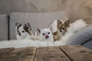 Top 15 Best Small Dogs for Kids That Everyone Should Have