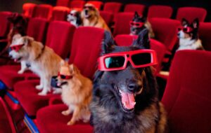 BEST DOG MOVIES OF ALL TIME