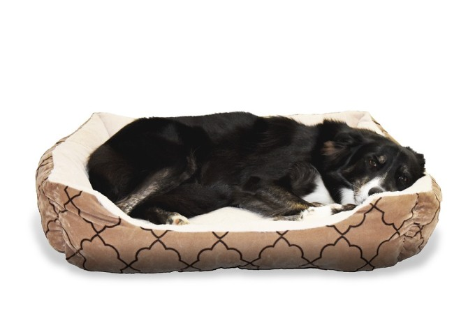 Sofa Beds for Dogs Reviews
