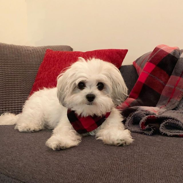 Shichon sitting in the sofa
