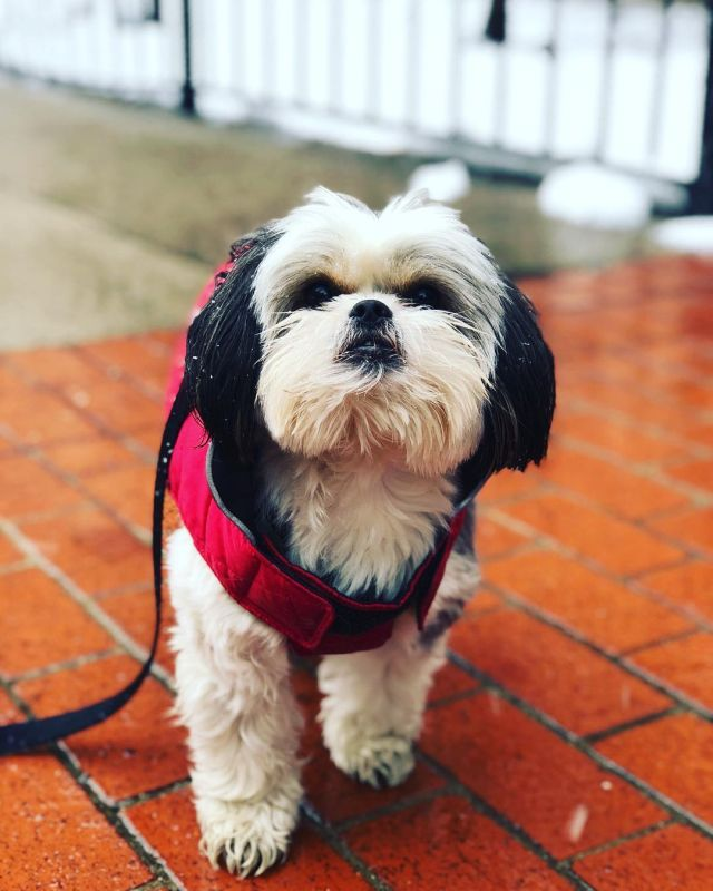 Boh Shih wants to play