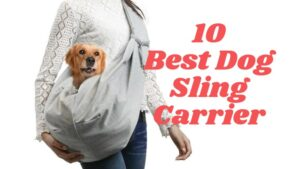 Cute dog inside a sling carrier