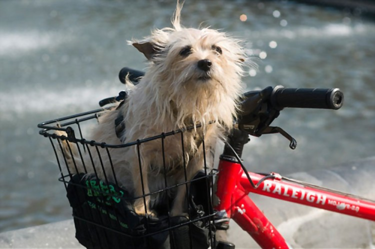 cute canine inside a bicycle basket